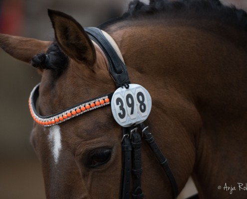 pony kampioenschappen-45