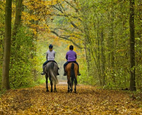 #beschrijving# #collectie# paarden #zoekkeyword# recreatief; buiten; buitenrit; herfst; bladeren; buitenrijden; bosrit; bos; bomen; bospad; bosweg; zandweg; ruiterpad; samen; plezier; natuur #categorie# Recreatie #persoon# Zon, Jantien van; Jong, Sanne de #nationaliteit# #paard# Centaur; Baas B #paardkleur# #stamboek# #bijzonderheid# Herfst; Buitenrit #onderwerp# Herfst in Amsterdamse Bos #locatie# Amsterdam #land# Nederland #definitief# ja #eventid# 166
